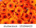 Orange Daisy Flowers