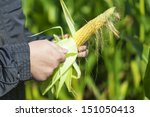 farmer on the corn field with... | Shutterstock . vector #151050413
