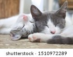 Stock photo little kitten hugging eachother and sleeping in a cute pose sweet and funny pets and animals 1510972289