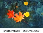 Autumn Maple Leaves In Puddle....