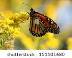 a monarch butterfly  danaus... | Shutterstock . vector #151101680