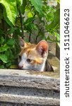 Stock photo cute baby kitten sitting in a tree pot cute kitten brown white hairs color indonesian domestic 1511046623