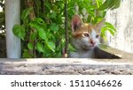 Stock photo cute baby kitten sitting in a tree pot cute kitten brown white hairs color indonesian domestic 1511046626