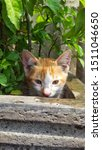 Stock photo cute baby kitten sitting in a tree pot cute kitten brown white hairs color indonesian domestic 1511046650