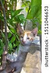 Stock photo cute baby kitten sitting in a tree pot cute kitten brown white hairs color indonesian domestic 1511046653