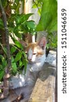 Stock photo cute baby kitten sitting in a tree pot cute kitten brown white hairs color indonesian domestic 1511046659