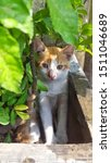 Stock photo cute baby kitten sitting in a tree pot cute kitten brown white hairs color indonesian domestic 1511046689