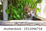 Stock photo cute baby kitten sitting in a tree pot cute kitten brown white hairs color indonesian domestic 1511046716