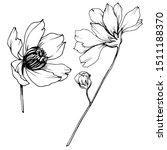 vector cosmos floral botanical... | Shutterstock .eps vector #1511188370