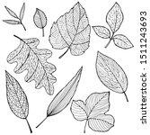 set of drawings of leaves in... | Shutterstock .eps vector #1511243693