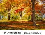 Colorful Autumn Foliage Trees...