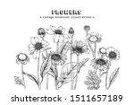 sketch floral botany set. daisy ... | Shutterstock .eps vector #1511657189