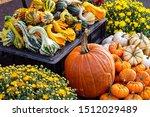 Autumn Display Of Pumpkins ...