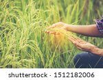 Asia Farmer Woman Holding Rice...
