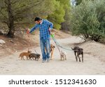 Stock photo professional dog walker or pet sitter walking a pack of cute different breed and rescue dogs on 1512341630