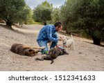 Stock photo professional dog walker or pet sitter with a pack of cute different breed and rescue dogs enjoying 1512341633