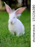 Stock photo baby rabbit in grass summer day 151236380