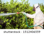 Weed insecticide fumigation. Organic ecological agriculture. Spray pesticides, pesticide on fruit lemon in growing agricultural plantation, spain. Man spraying or fumigating pesti, pest control.  - stock photo