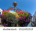 Beautiful Petunia Flower In A...