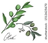 vector olive branch with fruit. ... | Shutterstock .eps vector #1512625670