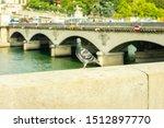 Dove On White Stone Near Seine...