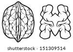 walnut | Shutterstock .eps vector #151309514