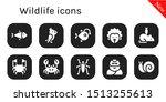 wildlife icon set. 10 filled...   Shutterstock .eps vector #1513255613