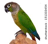 Green Cheek Conure Isolated On...