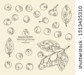 collection of maqui berry ... | Shutterstock .eps vector #1513435310