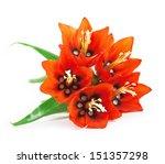 Flower   Imperial Fritillary....