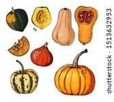 Autumn Pumpkins. Sketch Of Foo...