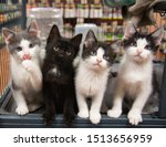 Stock photo four kittens in cage pet store cat black white grey sitting cute portrait kitten cats pet pets funny 1513656959