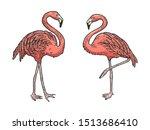 Flamingo Bird Color Sketch...