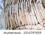 Elephant ivory is a hard  white ...
