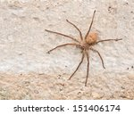 Brown Spider On Cement Wall