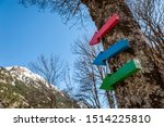 Three colored arrows nailed to a tree in the forest of the spa of Panticosa, point towards the Pyrenees Mountains (Spain).