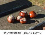 Conker On A Park Bench