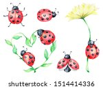 Big Ladybug Set  Green And...