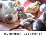 Stock photo many little kittens play on the bed domestic cats in a shelter no one needs cats breeding cats 1514545469