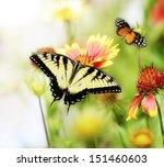 Stock photo beautiful butterflies on the flowers 151460603
