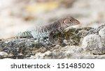 wild water monitor  varanus...   Shutterstock . vector #151485020