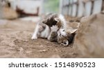 Stock photo two little gray kittens are playing and fighting on the street rivalry concept 1514890523