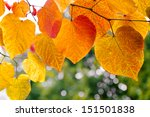 Tree Branch With Autumn Leaves...