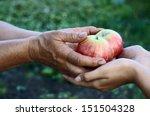 woman giving girl apples from... | Shutterstock . vector #151504328