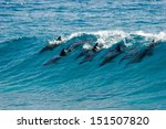 A Pod Of Dolphins Catch A Wave...