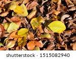 Autumn  Season Of The Year...