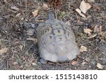 Stock photo very cute tortoise is walking on the road 1515143810