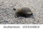 Stock photo very cute tortoise is walking on the road 1515143813