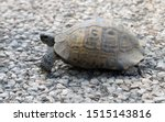 Stock photo very cute tortoise is walking on the road 1515143816