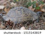 Stock photo very cute tortoise is walking on the road 1515143819